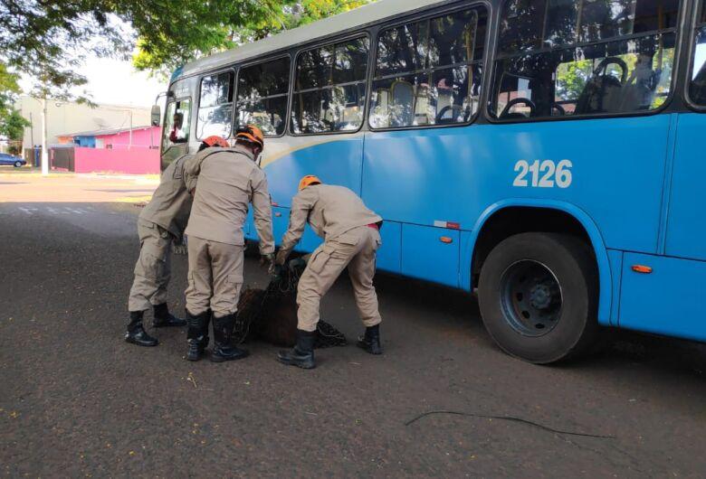 Capivara é resgatada na região central de Dourados