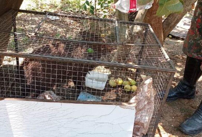 Mulher que criava cateto no quintal de casa é multada