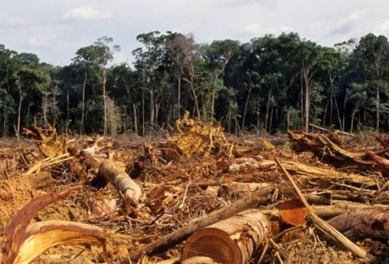 MPE abre inquérito para apurar desmatamento ilegal em fazenda de Dourados