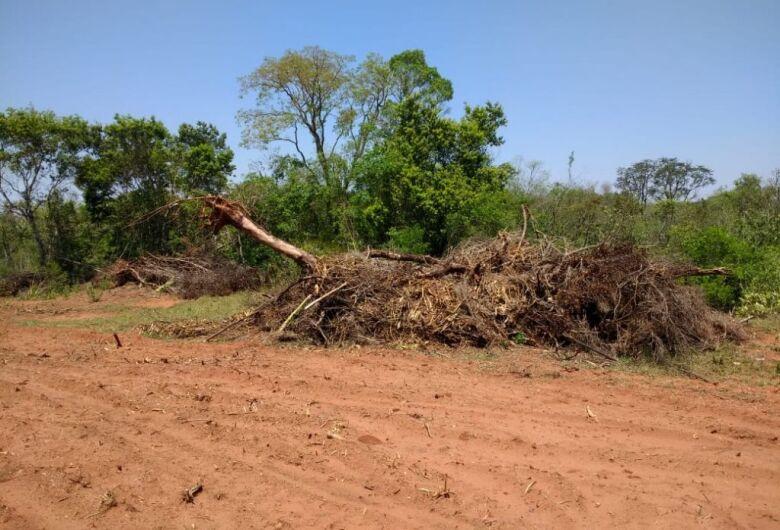PMA de Amambai autua infrator em R$ 7,2 mil por desmatamento ilegal