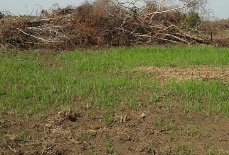 Infrator é autuado em R$ 20 mil por desmatamento ilegal de vegetação