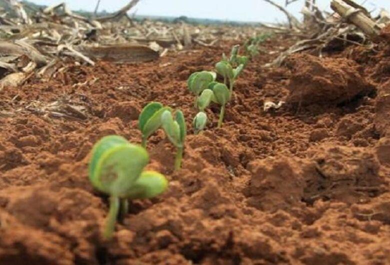 Produtores aproveitam chuvas e apressam plantio da soja, que pode ter nova safra recorde