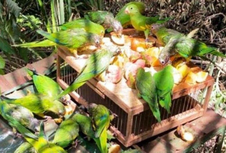 Entre aves e mamíferos, mais de 100 animais retornam à natureza após reabilitação no Cras