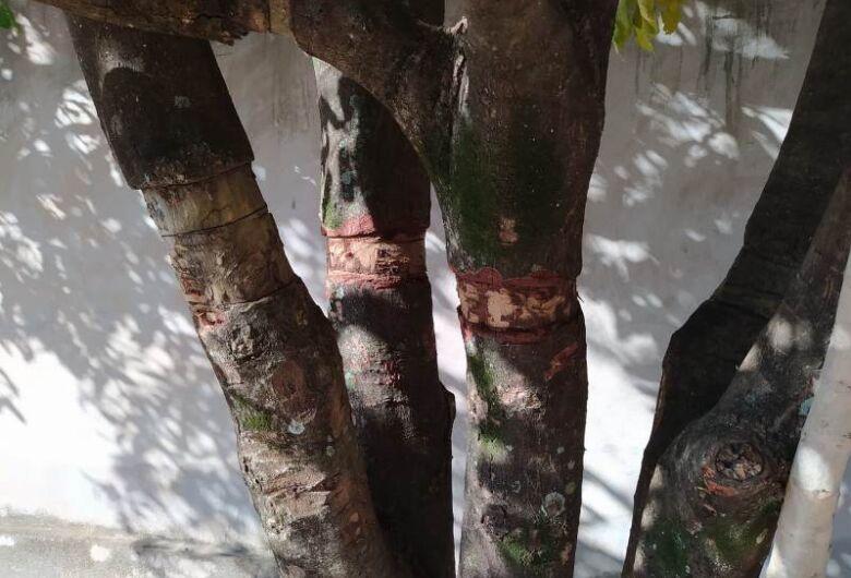 Homem é multado por danificar árvores que estavam na calçada