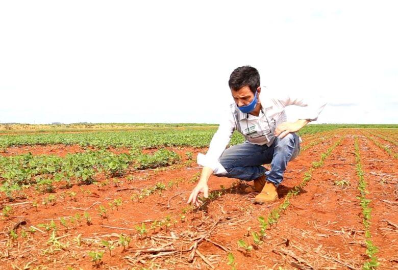 Fundação Chapadão experimenta em torno de 60 variedades de soja