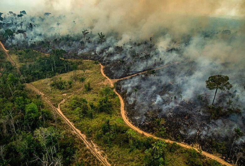 Diante de fogo recorde, especialistas temem que sociedade banalize tragédias ambientais