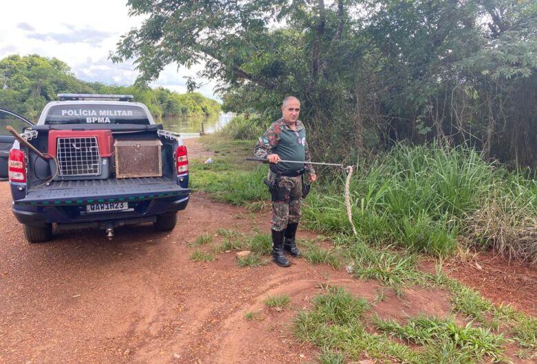 Jiboia com mais de dois metros é capturada em estufa de plantas da UFGD pela PMA de Dourados
