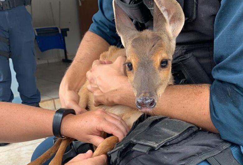Animal silvestre é resgatado após entrar em residência