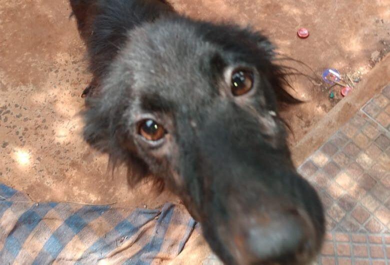 Mulher leva multa de R$ 1 mil por deixar cachorro sem comida e doente