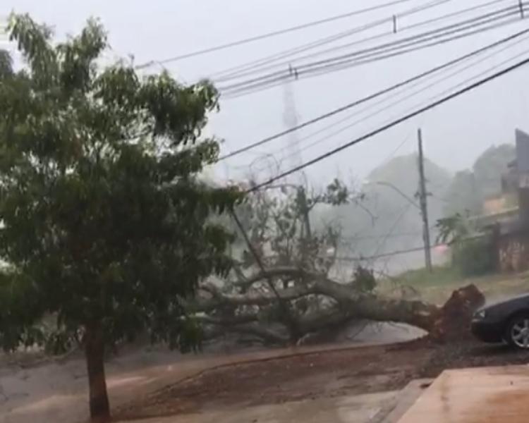 Árvore caiu e trânsito ficou interrompido no local - Crédito: Fotos: Reprodução/Redes sociais