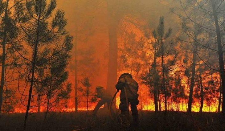 MS anuncia R$ 56 milhões para combate permanente aos incêndios florestais -