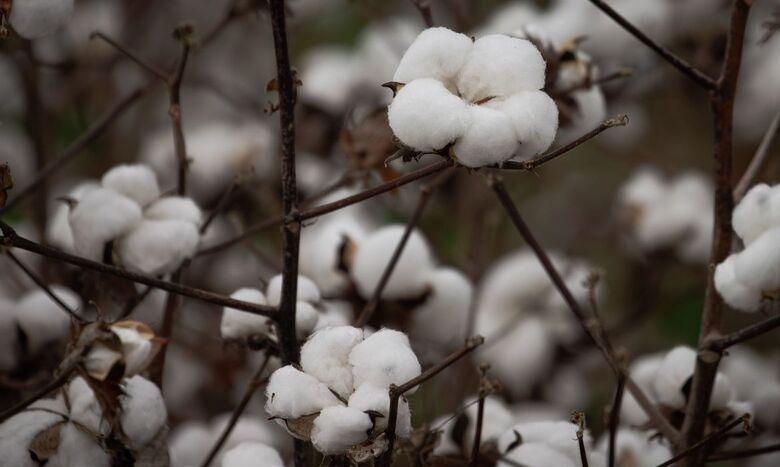 Embrapa anuncia bioinseticida contra pragas na soja, milho e algodão - Crédito: © CNA/Wenderson Araujo/Trilux