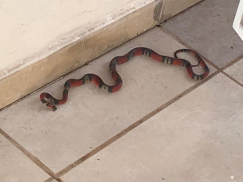 PMA de Campo Grande captura serpente da espécie coral em residência -