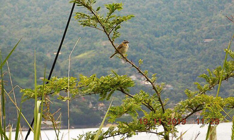 Mais de 25 mil espécies da flora só existem no Brasil, mostra estudo - Crédito: Divulgação/PlantVerd