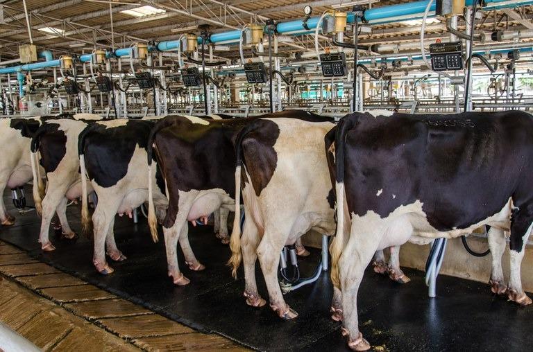 CMN aprova medidas para o setor leiteiro - Crédito: iStock/Mapa