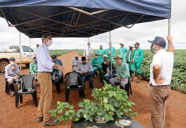 Palestra sobre fisiologia do algodoeiro ajuda produtores a aperfeiçoarem manejos - Crédito: Divulgação/Ampasul