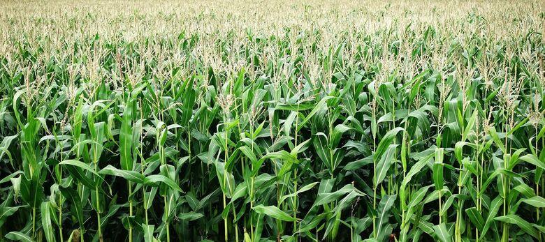 O agro brasileiro alimenta 800 milhões de pessoas, diz estudo da Embrapa -
