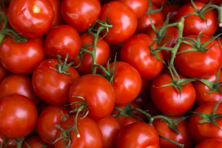Pesquisadores identificaram fungos que estimulam crescimento de tomate - Crédito: Divulgação