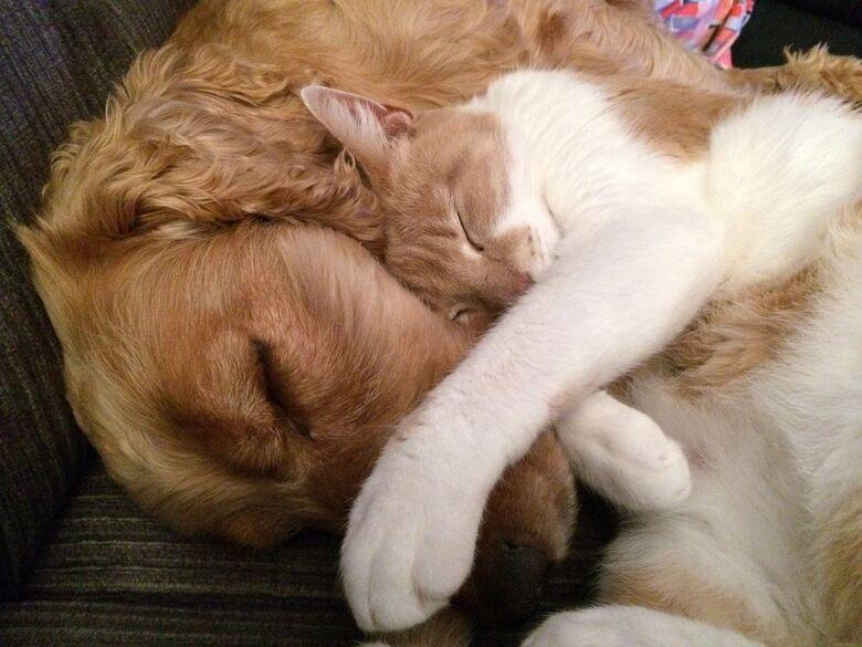 Unidade Móvel de Castração de Cães e Gatos - Crédito: Pixabay