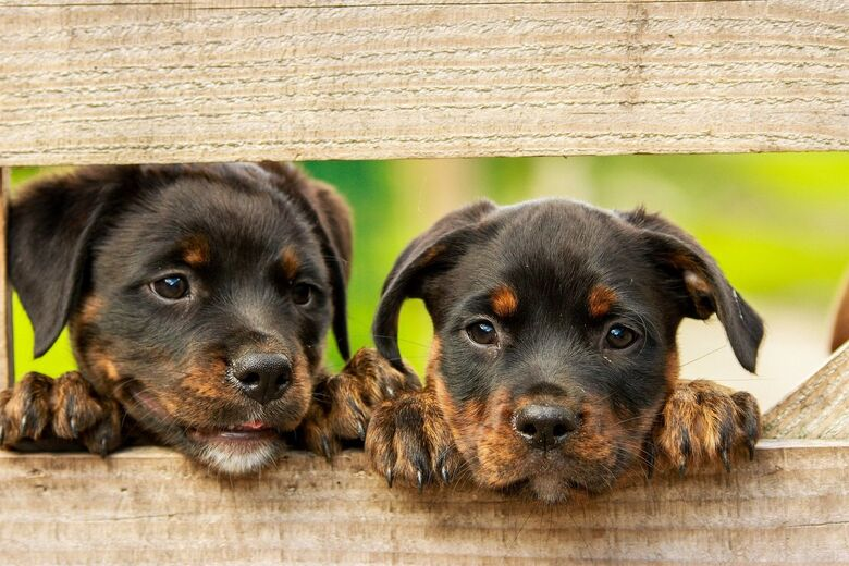 Projeto autoriza que fábricas veterinárias produzam vacina contra a covid-19 - Crédito: Pixabay