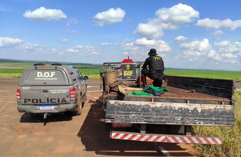 DOF apreende caminhonete que seguia para SP com mais de meia tonelada de droga - Crédito: DOF