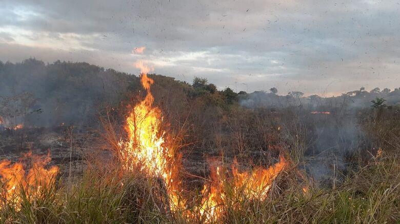 Fogo queima parte de área de preservação ambiental e mobiliza GM e Bombeiros - Crédito: Divulgação