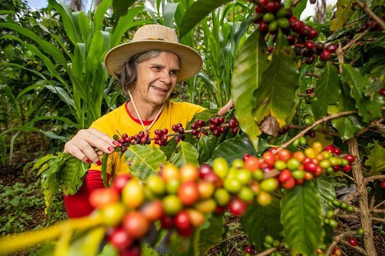 Curiosidades no plantio, manejo e colheita do café são temas de curso oferecido pelo Senar/MS - Crédito: CNA