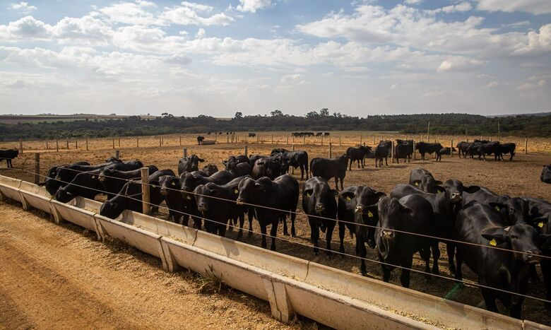 Abate de bovinos no primeiro trimestre tem menor nível desde 2009 - Crédito: CNA/Wenderson Araujo/Trilux