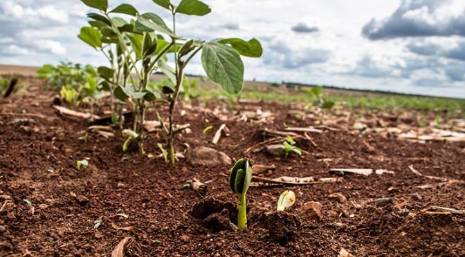 Saiba mais sobre o vazio sanitário da soja e calendário de semeadura em MS -