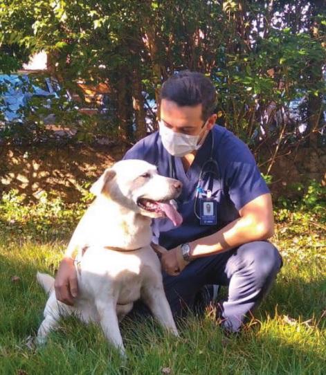 Câncer em cães e gatos é cada vez mais comum, afirma veterinário - Crédito: Divulgação