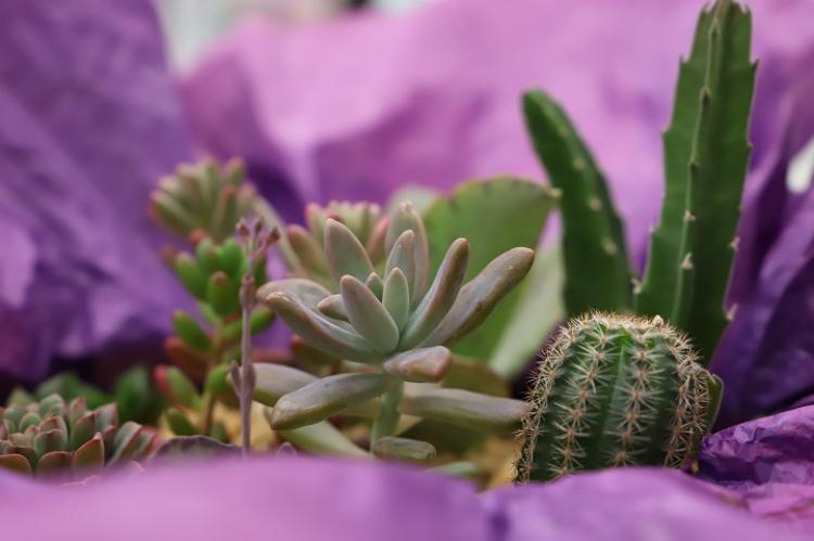 Curso gratuito do Senar/MS ensina como cultivar corretamente cactos, suculentas e rosas do deserto - Crédito: Famasul