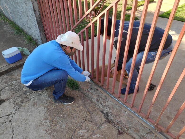 CCZ inicia campanha de vacinação antirrábica em Dourados - Crédito: Divulgação