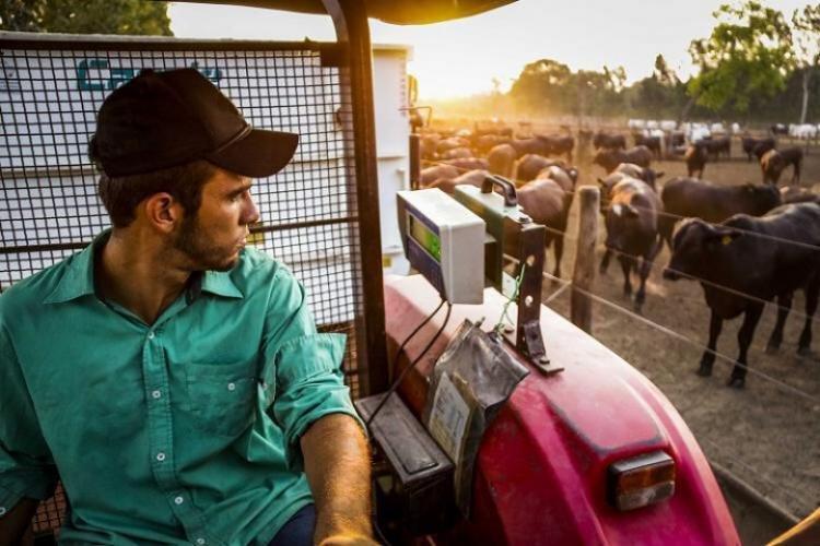 Entre janeiro e julho, agropecuária teve participação de 11% na geração de empregos - Crédito: Famasul
