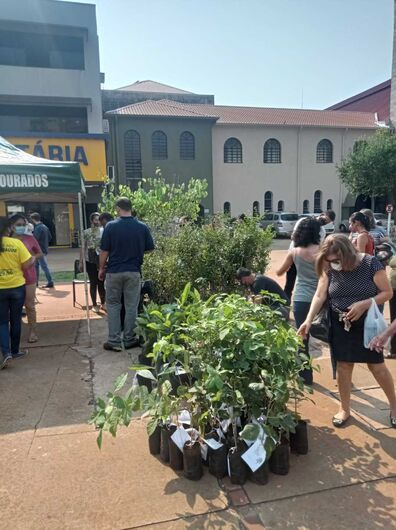 Em comemoração ao Dia da Árvore, mudas são distribuídas na Praça Antônio João - Crédito: Kamila Rios