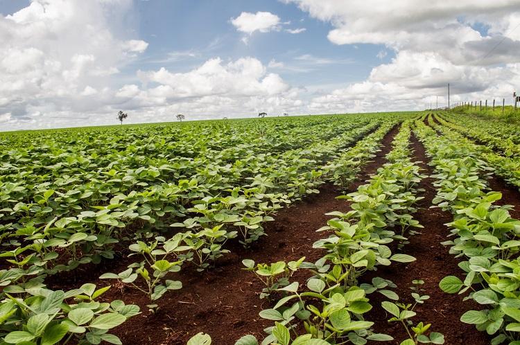 Perfeita distribuição de sementes é prática eficiente na obtenção de bons resultados na agricultura - Crédito: Divulgação