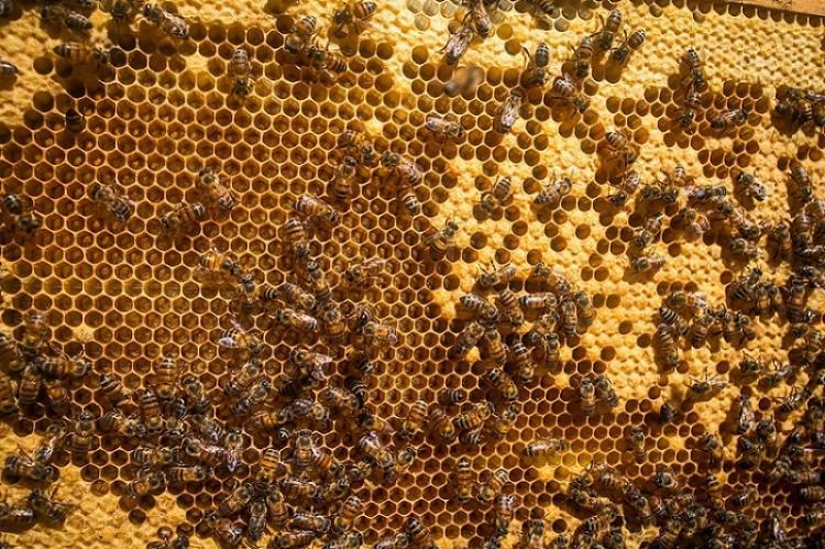 A exemplo das abelhas, gestão e logística são essenciais na multiplicação dos enxames - Crédito: Famasul