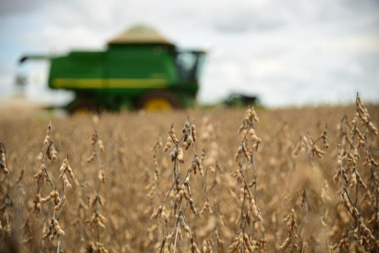 Preço médio da saca de soja em Mato Grosso do Sul tem valorização de 60% - Crédito: Famasul