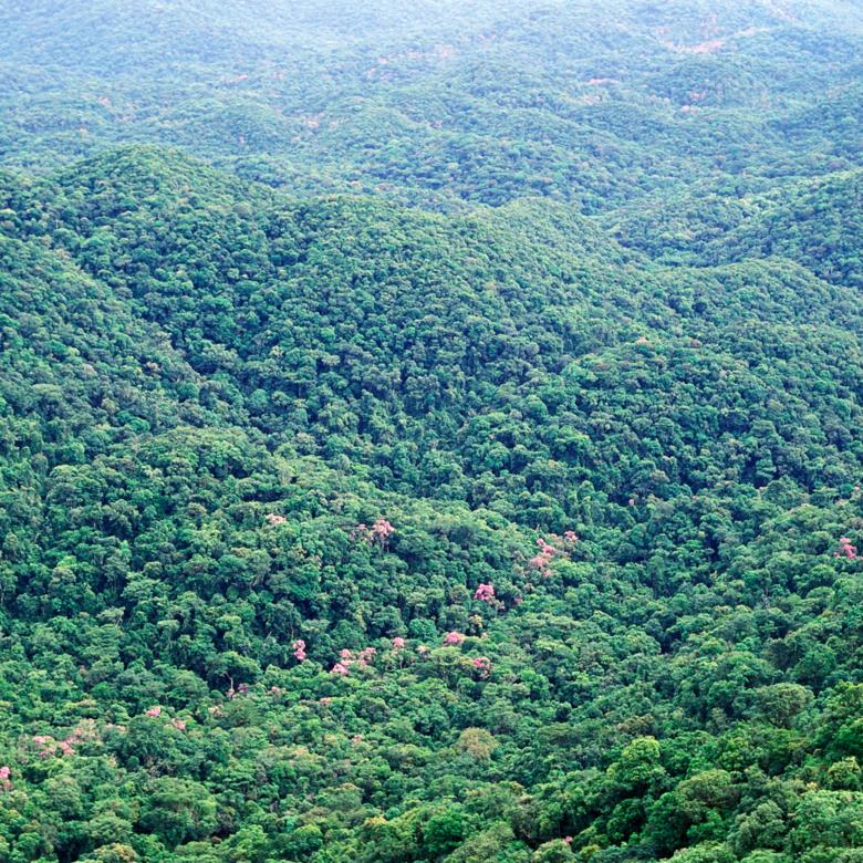 Ibama rejeita pedidos de flexibilização de regras ambientais feitos pelo Ministério da Economia - Crédito: Imagem Ilustrativa