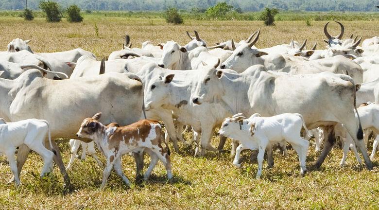 Rebanho bovino cresce 1,5% e atinge 218,2 milhões de cabeças em 2020 - Crédito: Licia Rubinstein/Agência IBGE Notícias