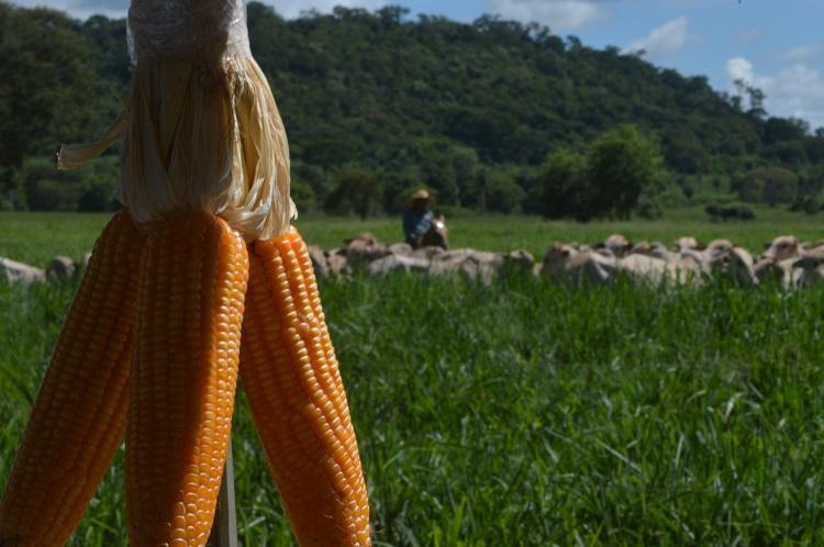 A evolução de Mato Grosso do Sul como uma das principais regiões produtoras do país - Crédito: Divulgação