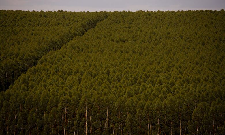 Florestas plantadas no Brasil somam 9,3 milhões de hectares em 2020 - Crédito: CNA/Wenderson Araujo/Trilux