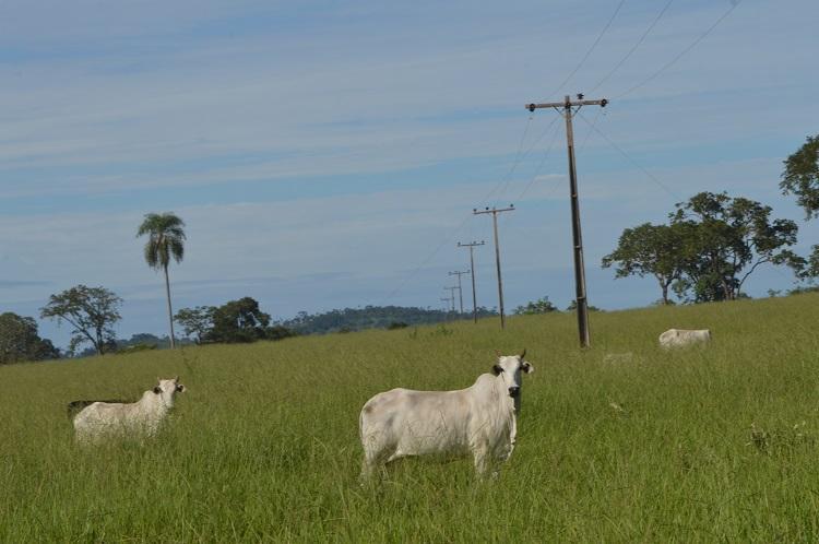 Produtores de MS beneficiados pela tarifa rural de energia devem atualizar cadastro até 30 novembro - Crédito: Famasul
