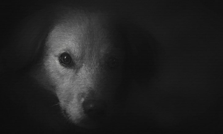 Poder público deve zelar pelo bem-estar dos animais em situação de abandono e maus-tratos -