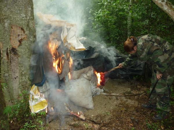 Senad destruiu plantação que daria para fabricar quase 200 tonelada de maconha  Foto: Divulgação   -