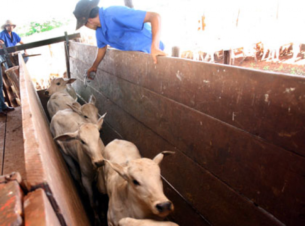 O prazo para vacinação na ZAV foi estendido para o dia 25 de dezembro  - Crédito: Foto: Divulgação