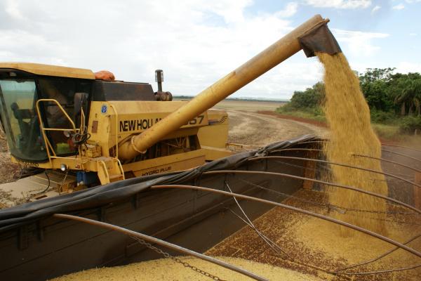 Brasil deve colher menos 700 mil toneladas de soja  - Crédito: Foto: Divulgação