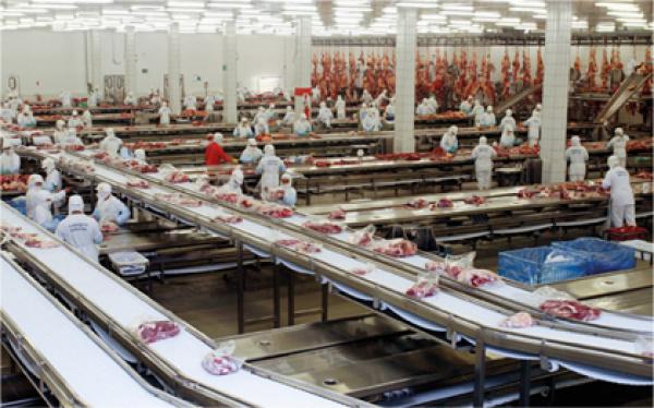 Medida é da Agência Estadual de Defesa Sanitária Animal e Vegetal   - Crédito: Foto :Divulgação