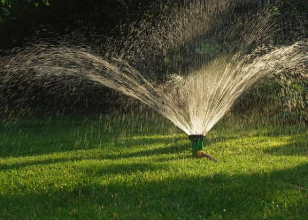 A irrigação por gotejamento permite maior controle da umidade  - Crédito: Foto: Ilustração