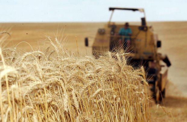 Nova classificação do trigo deve ser ampliada para 2012  - Crédito: Foto: Divulgação