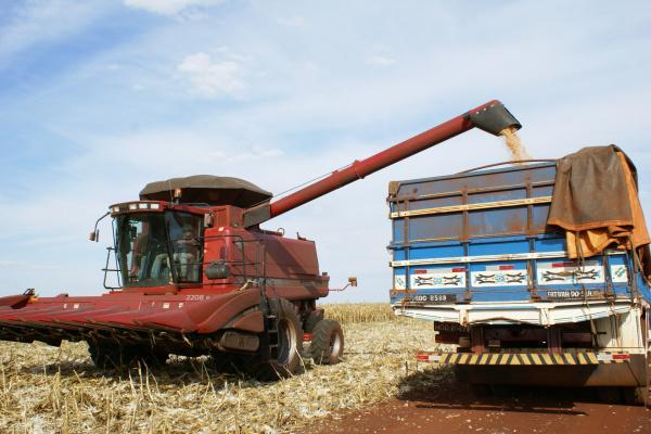 Resultado do milho em MT e Go comprometeu desempenho do Centro-Oeste   - Crédito: Foto: Divulgação